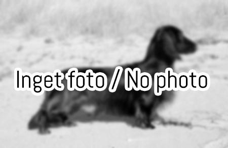 inget_foto